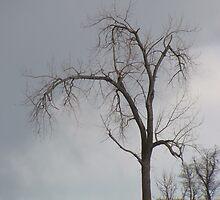 Stormy Day in the Prairies by debbielhea
