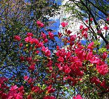 God's wonderous beauty  by spiritsfreedom
