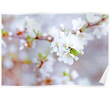 Spring Blossoms Soft Poster