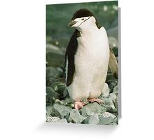 Chinstrap On The Rocks Greeting Card