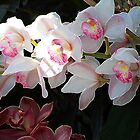 Orchid Dance by Kathleen Struckle