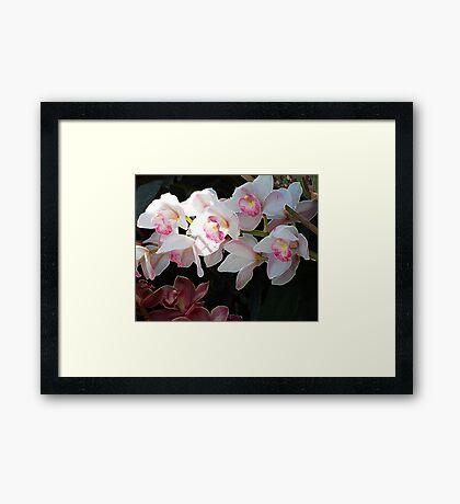 Orchid Dance Framed Print