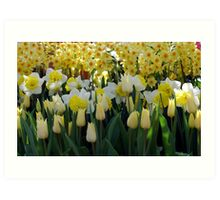 Tulips And Jonquils Art Print
