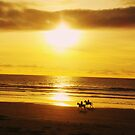 horses at sunset by Diana Forgione