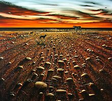 Working the Long Paddock by John  Murray