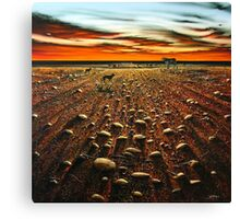 Working the Long Paddock Canvas Print
