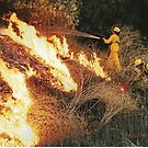 Brush Fire by Merilyn