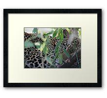 Leopard Hiding Framed Print