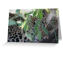 Leopard Hiding Greeting Card