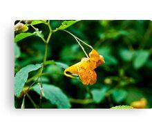 Orange Snapper!  Canvas Print