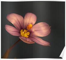 Flower_13 Poster