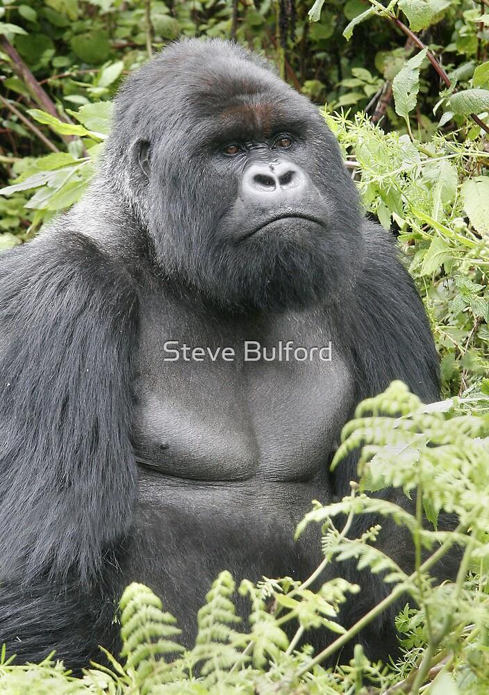 Silverback Gorilla by Steve Bulford