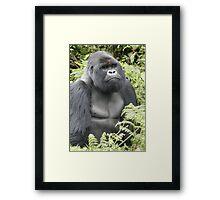 Silverback Gorilla Framed Print