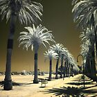 StKilda Palms by Louise Wolfers