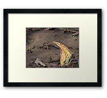 Yellow Skunk Framed Print