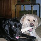 My dog, Cassie and Cooper, foster dog by BubbaGeorge