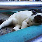 Rest by frozenfa