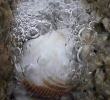 Nature's Bubbly by sarah ward