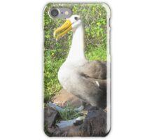Galapagos Islands, Albatross iPhone Case/Skin