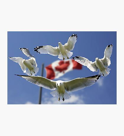 Formation of Gulls Photographic Print