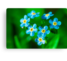Forget-me-not flowers Canvas Print