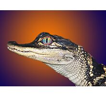 Go Gators Photographic Print