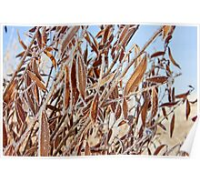 Frozen willow branches Poster