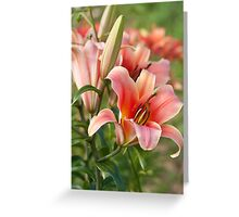 Lilycrest Gardens 2009 Greeting Card