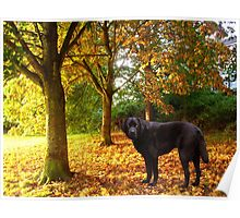 Autumn Playtime Poster