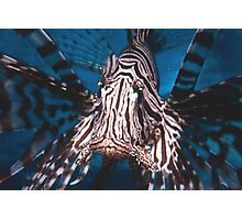 Lion Fish Papua New Guinea Photographic Print