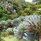 Cycad Garden by Bruce Eitzen
