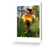 Bulldogs Orchid - Mount Barker Summit Greeting Card