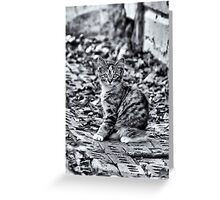Camo Greeting Card