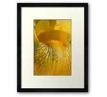 Iris Macro Framed Print