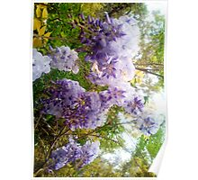 Nature Blooms Poster