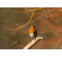 Robin! Photographic Print