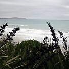 Atlantic side of South Island NZ by oiseau