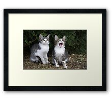 2 kittens Framed Print