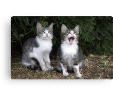 2 kittens Canvas Print