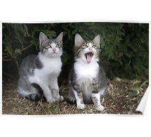 2 kittens Poster
