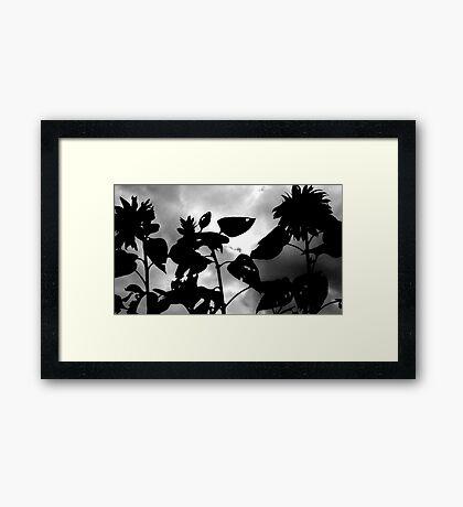 Sunflower suite Framed Print