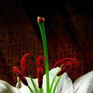 Oriental Lily by Basia McAuley