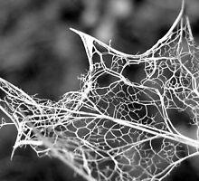 Death of a Holly leaf by Sara Wiggins