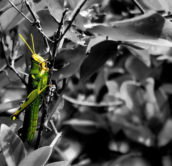 Green Hopper by Sandra Moore
