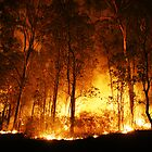 Forest Ablaze by Peter Wilson