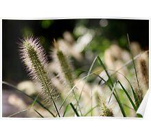 Serene Plantlife Poster
