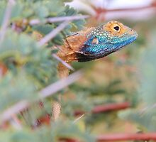 Blue Headed Lizard - Peeking Out by LivingWild