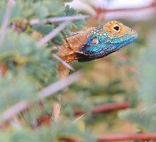 Blue Headed Lizard - Peeking Out by LivingWild