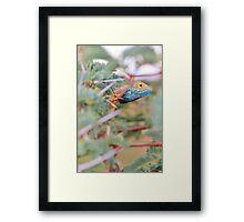 Blue Headed Lizard - Peeking Out Framed Print