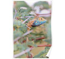 Blue Headed Lizard - Peeking Out Poster